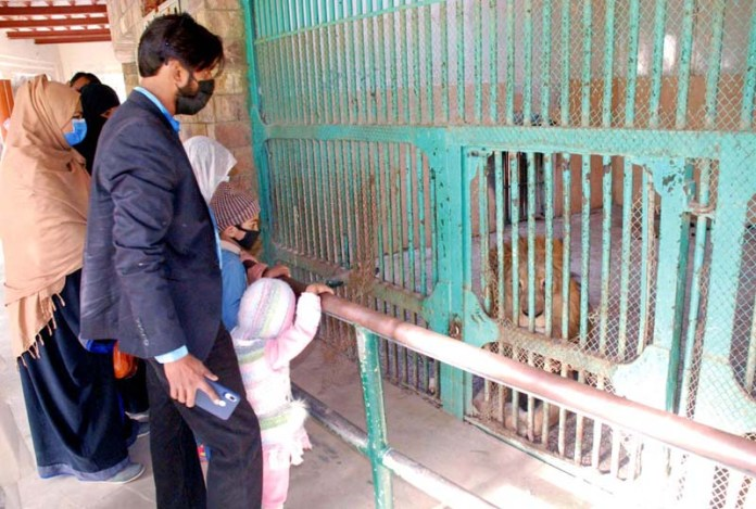 Families watching a Lion in a cage at Bahawalpur Zoo