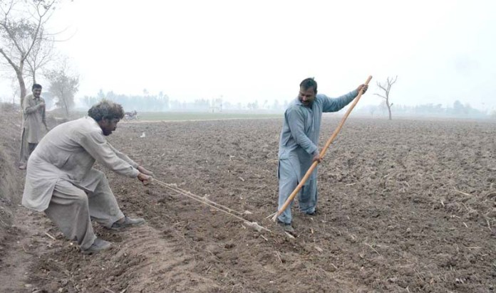 Farmers busy in work during a foggy weather at their farm field