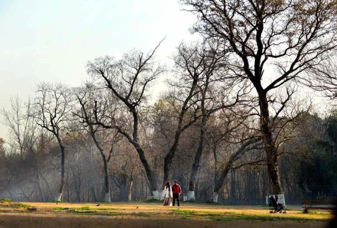 An attractive view of leafless tree at Rose & Jasmine Garden during autumn season in Federal Capital