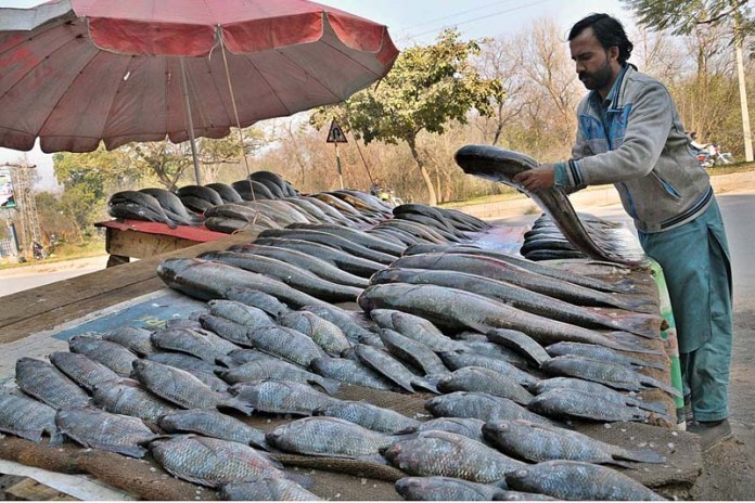 A vendor arranging and displaying fish to attract the customers at his roadside setup in Federal Capital