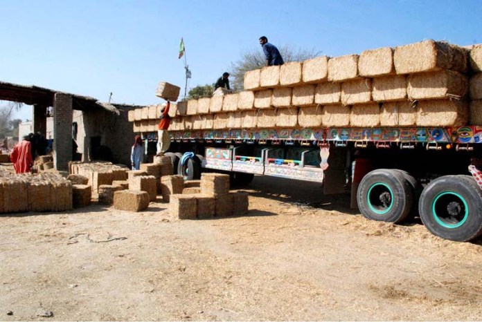 Labourers busy in loading dry fodder on delivery vehicle
