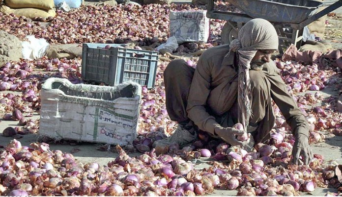 Labourers busy in grading onions at Vegetable and Fruit Market