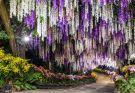 大坑休閒農場,夢幻景點,紫藤隧道