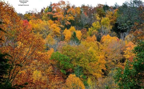 Little Stony Creek Valley of High Knob Massif - October 2014