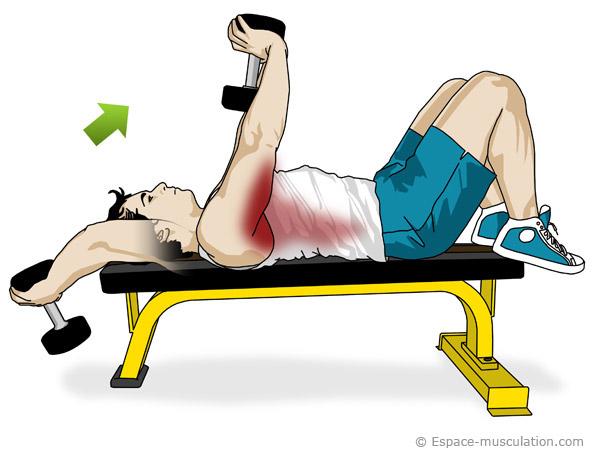 Musculation Des Pectoraux Avec Haltres Muscu Maison