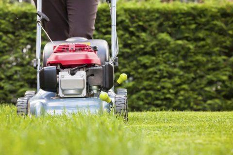 lawn servicing management