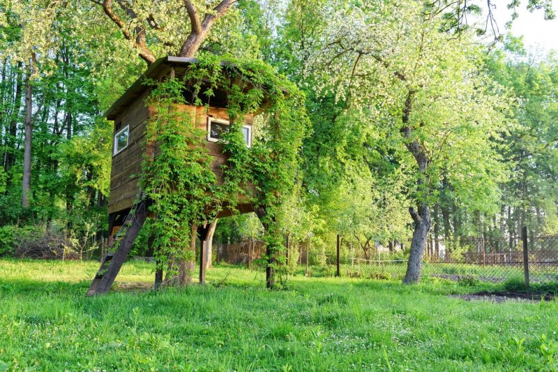 7 ideas to Build an Amazing Treehouse in Your Backyard