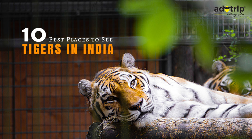 10 Best Places to See Tigers in India