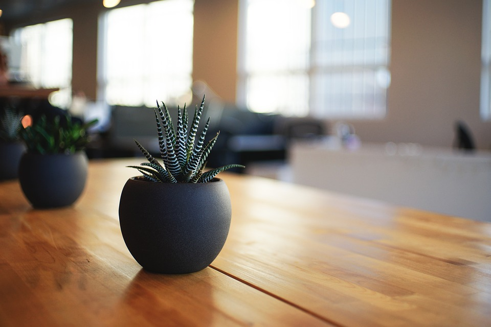 7 Benefits of Indoor Plants for Your Home and Workplace