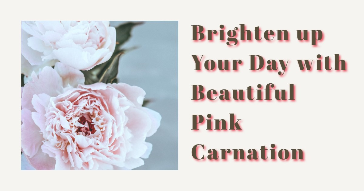 Brighten up Your Day with Beautiful Pink Carnation