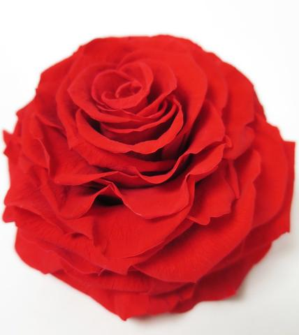 order flowers online at