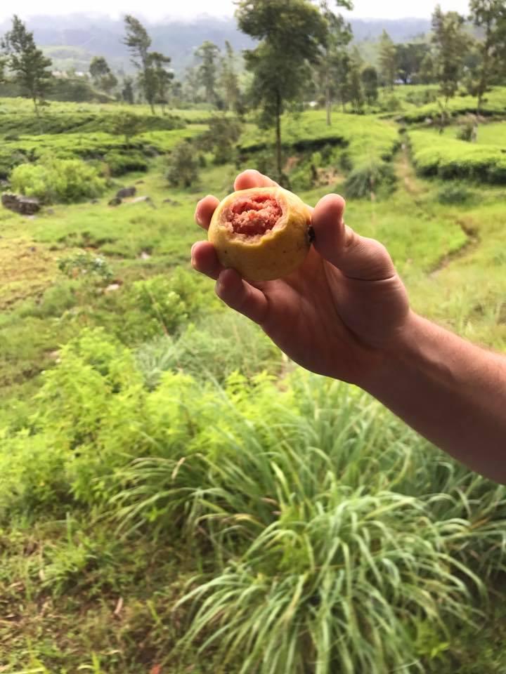 Guava love
