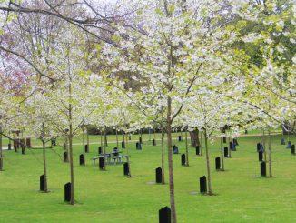 De Syngende Træer i blomst