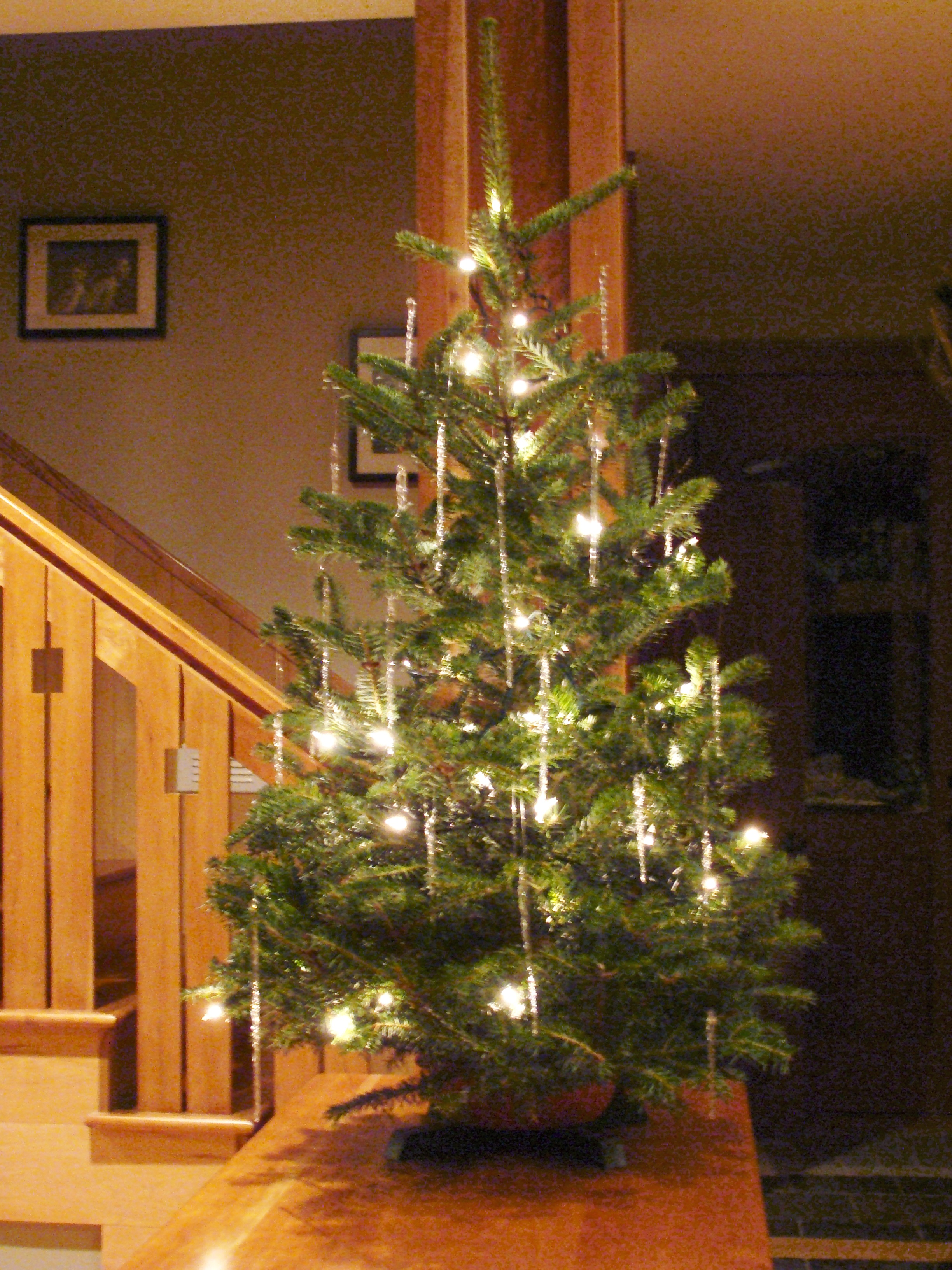 Live Tabletop Christmas Tree App Evergreens