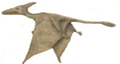 non-extinct ropen pterodactyl
