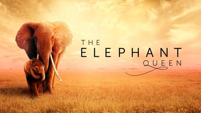 "Tela de título de ""The Elephant Queen"" no Apple TV+."