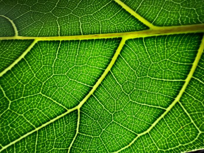 Macro photo of a leaf taken on iPhone 13 Pro's Ultra Wide camera.