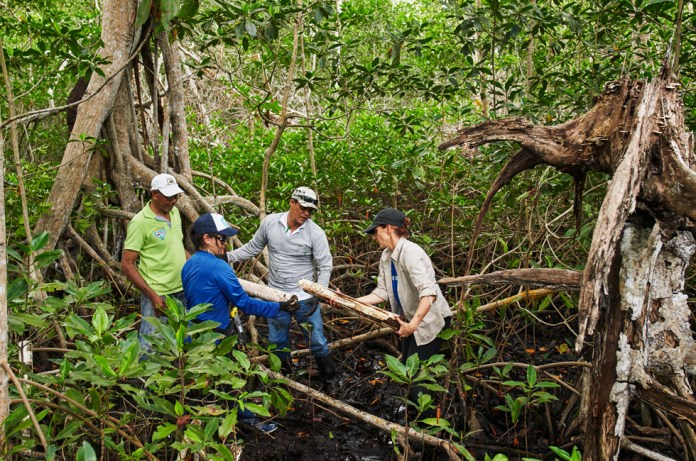 Lavoratori in una foresta di mangrovie in Colombia.