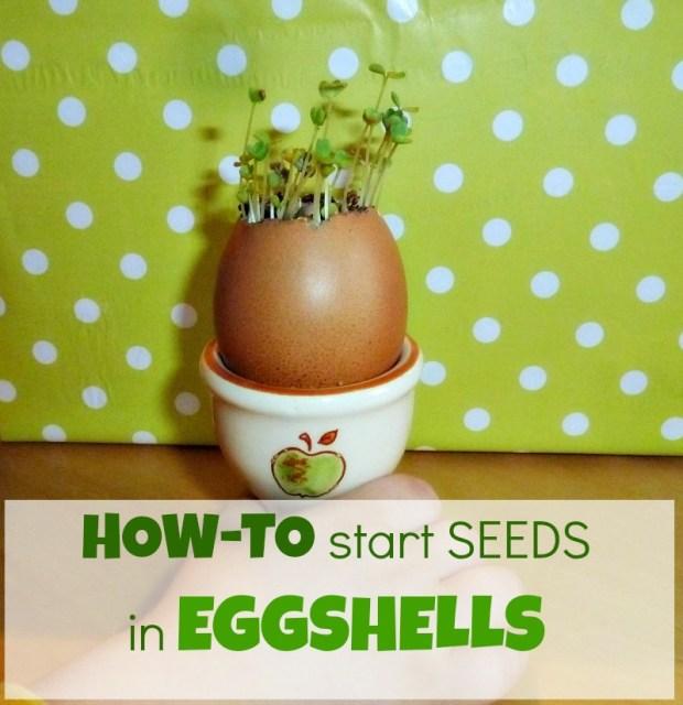 how to start a mini garden
