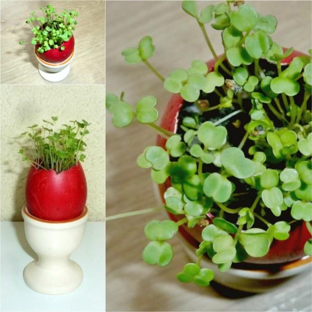 Easter eggshell garden decoration and spring gardening