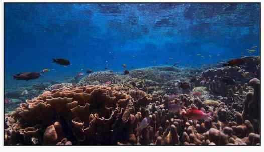 underwater screen saver