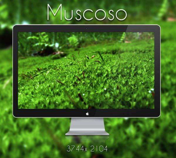 Muscoso