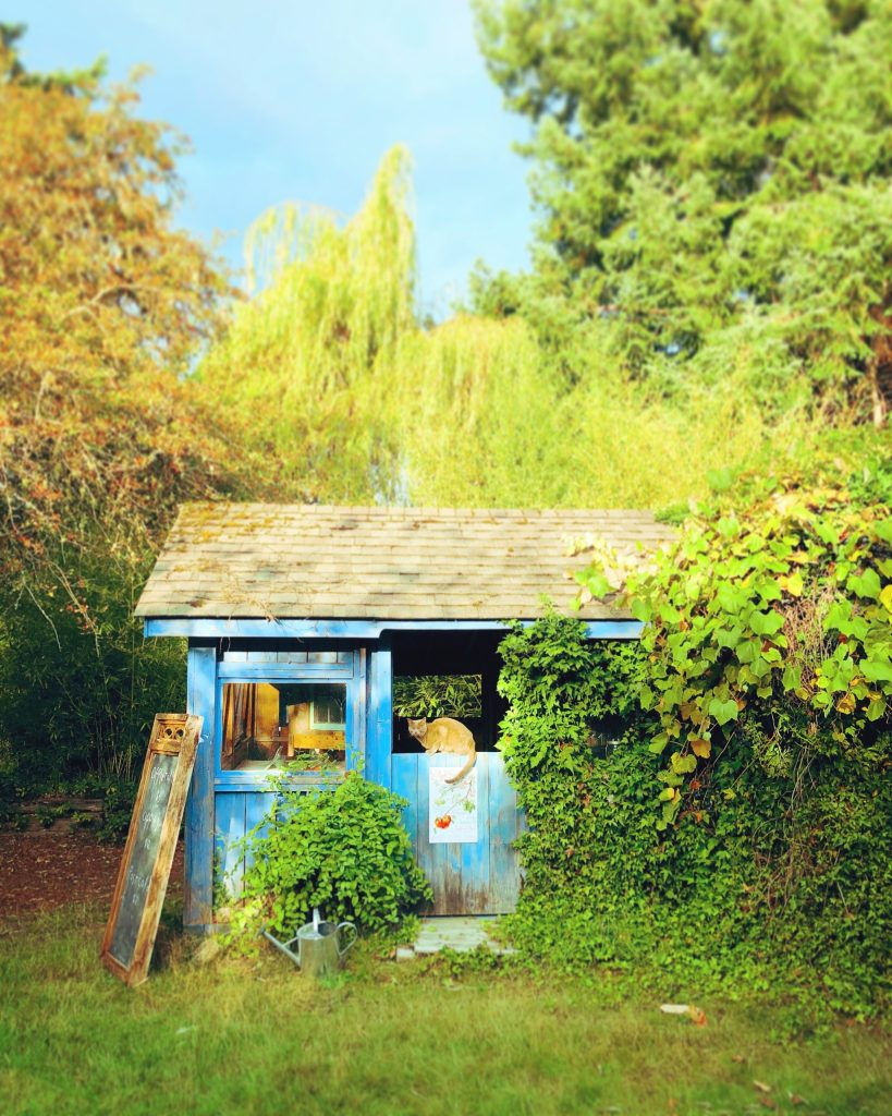 a cat in the little blue house