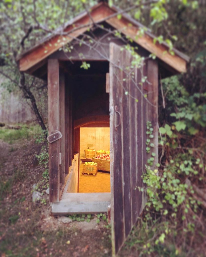 through the open door of the root cellar, down the steps, sit crates of apples.