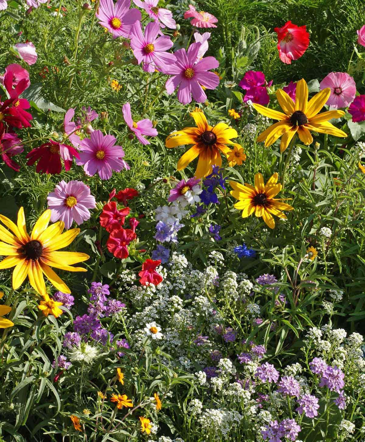 Cottage Garden Seed Mixture Applewood Seed Company