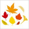 赤や黄色に色づいた葉のイラスト