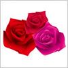 バラの花のイラスト