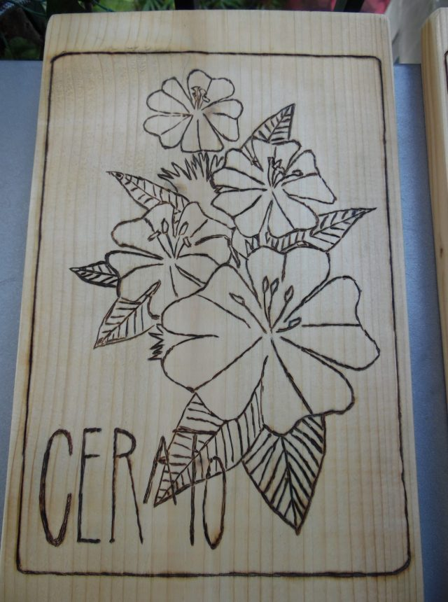 pyrogravure fleur cerato