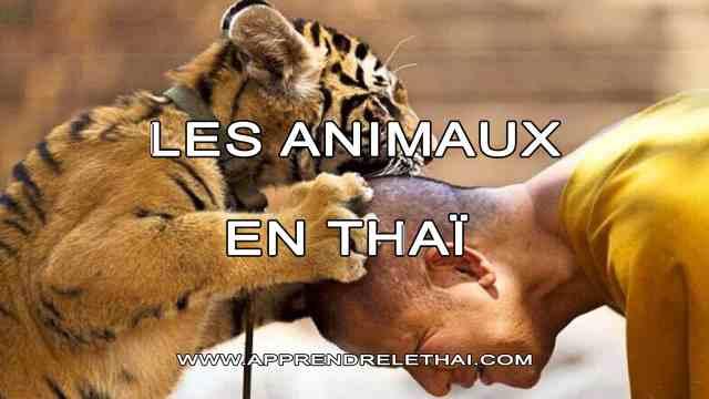 Les Animaux en Thaïlande