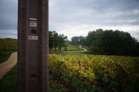 Le GR6 dans les vignes