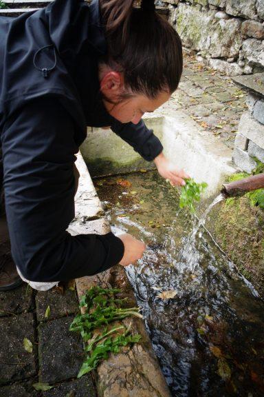 Amélie lave les pissenlits