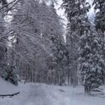 Forêt, Lac noir