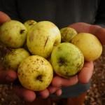Super pommes