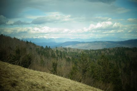 Les forêts slovènes à perte de vue