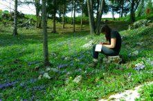 Croquis de violettes