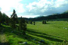 Les hauts plateaux du Monténégro. On a eu droit à un concert de grillons
