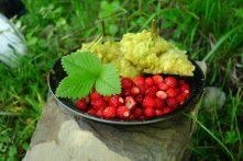 Beignets de fleurs du surreau et fraises des bois. Miam !