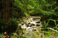 Ruisseau, Kintrishi