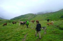 Dimitri nous conduit chez lui avec son troupeau de toreaux