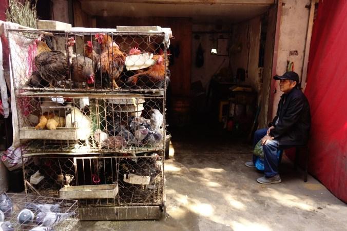 Vendeur de volailles - Marché de Lanzhou