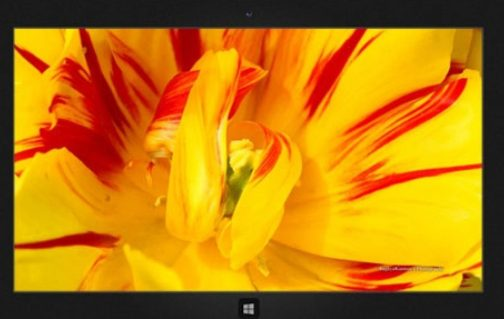 Download_Lovely_Tulip_Windows_Theme