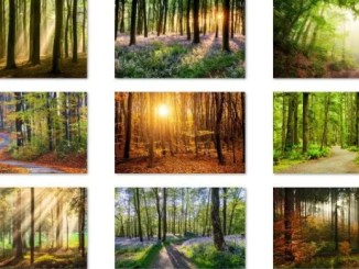 forest for the trees theme download on windows