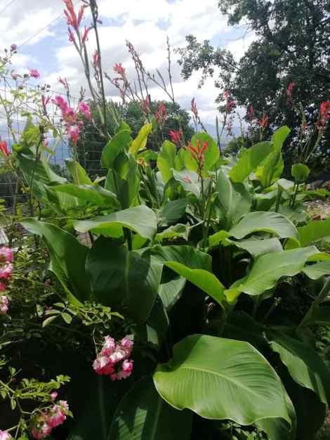 Piante da giardino resistenti al sole in estate