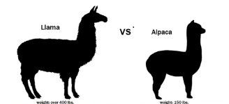 llama diferencia alpaca