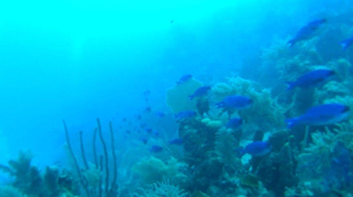 2 que hacer en riviera maya Arrecifes de Cozumel – Riviera Maya