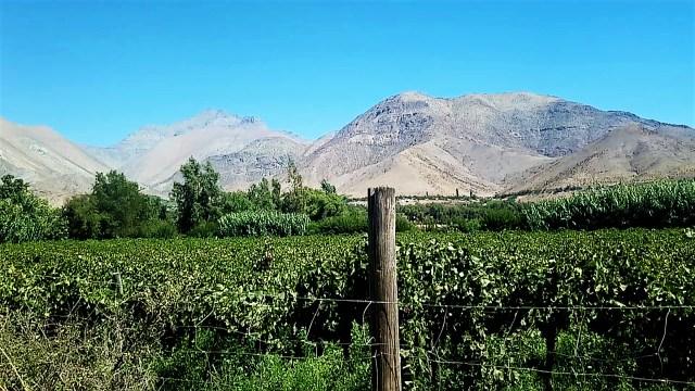Vallée de l'Elqui, Chili / Après la flemme